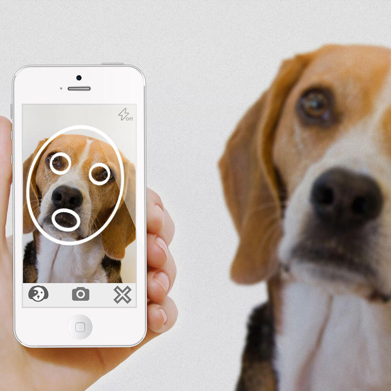 Face Recognition Ceaselessly Boom,Dog Face Recognition Is Coming